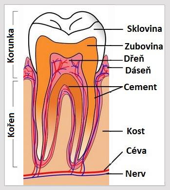 zub-skladba